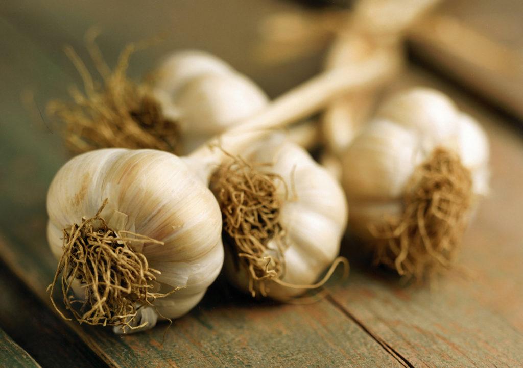 ontario-garlic